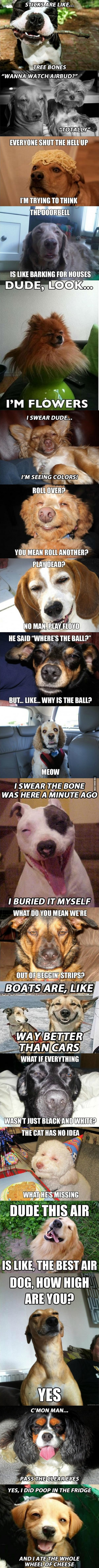 if dogs got high